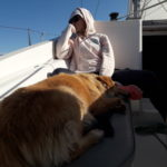 cane in barca a vela