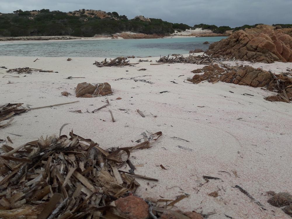 spiaggia-rosa-budelli